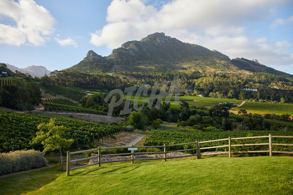 Views of the vineyard in the Cape