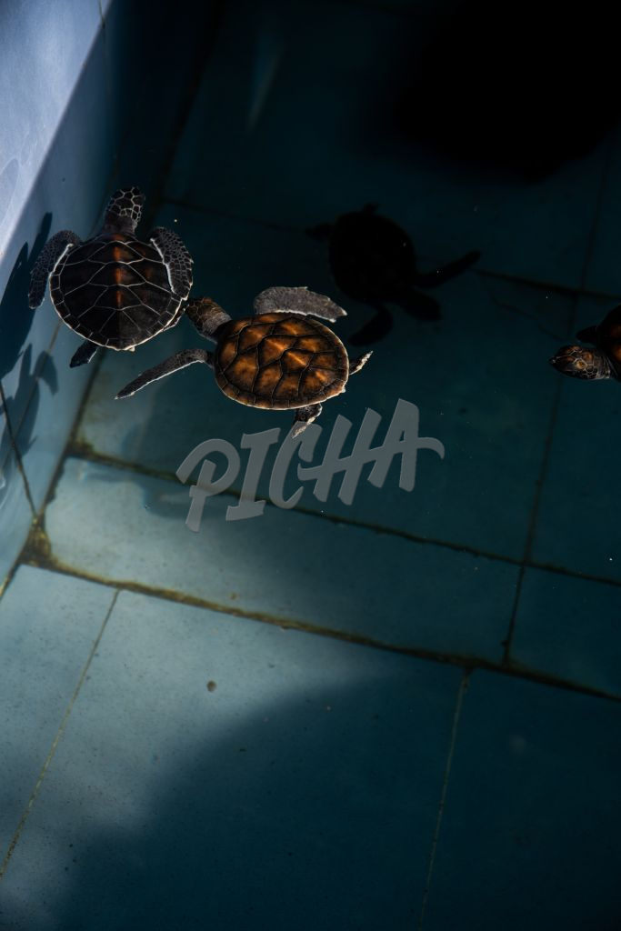 Turtles swimming in a pool
