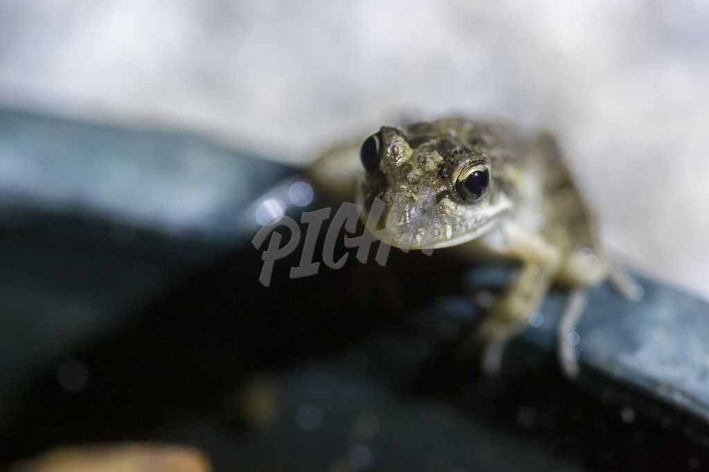 close up of a small Frog