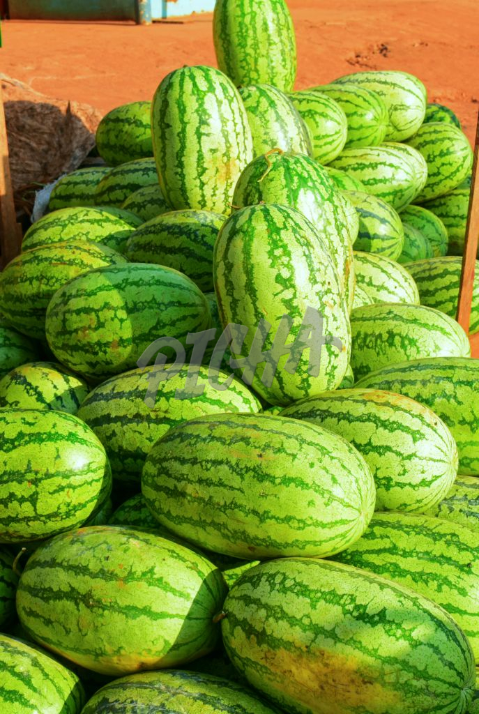 THE HIP OF GREEN WATER MELON