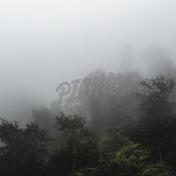 Misty Morning in the forest mountain