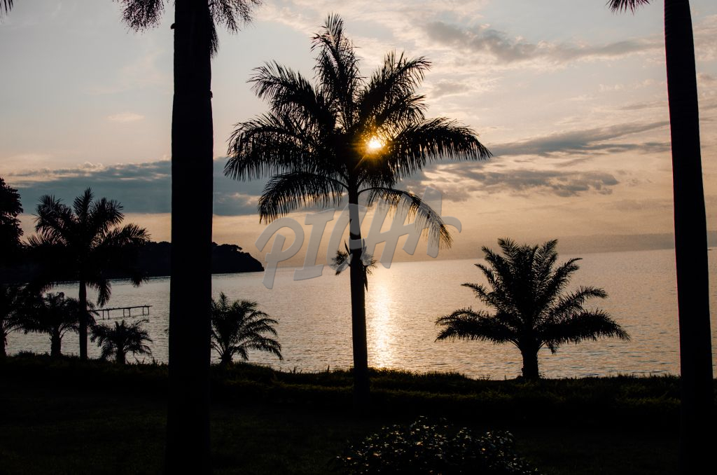 coconut tree and palm tree silhouette